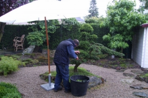 Japanse tuin Culemborg